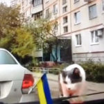 ねこちゃん突然動き出したバンパーに驚き。ふっ飛ぶ。 #猫動画