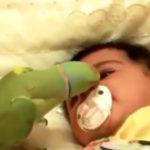 インコが赤ちゃんを泣き止ませる #赤ちゃん動画 #インコ