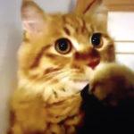 掃除機のホースで遊んでたら口に吸い付いて焦る #猫動画