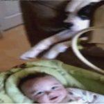 揺りかごを揺らして赤ちゃんをあやす犬#犬と赤ちゃん