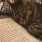 活字を読むと眠くなるにゃ~ #猫動画