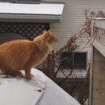 嫌な予感しかしない #キャットフォール #猫落下 #猫動画
