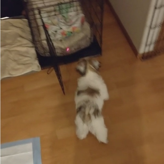 犬をケージに楽にいれる方法