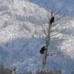 熊は意外に木登り得意 #熊動画