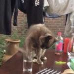 猫「もう・・なにすんねん・・・」 #猫動画