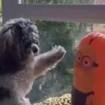 頭突きしたらまさかの反撃 #犬動画