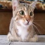 ホラームービーを表情豊かに見るにゃんこ #猫動画