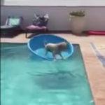 「ボール取りたいけど水に入りたくないし・・・そうだ!」 #犬動画