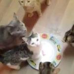 ちょっと意地悪して「さあご飯だよ」と 空の皿を置いた時の猫達の反応