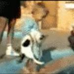 にゃんこ危機一髪!猫が子供に抱えられて噴水に投げ落とされそうになりますがまさかの大逆転劇 #猫動画
