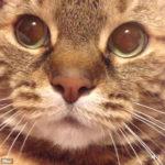 まんまるお目々の可愛い猫ちゃんが「にょ~おー」→「しゃー!」 何か怒らせることでもしたんでしょうか。