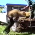 ものすごい勢いで牧草を降ろすお手伝いをする牧草犬 #ボーダーコリー #犬動画