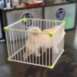 ケージごと脱走 犬動画