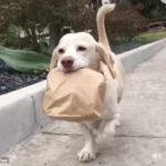 デリバリーしてくれるわんこ #犬動画