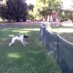ネットに突っ込んで1回転して強引に突破する #犬動画