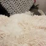 ホワイト忍者隠れ蓑術 # 犬動画