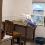 中を見たかったら床に落としちゃえ~ #猫動画
