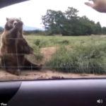 人「ばーい」 熊「ばーい」