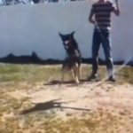 入るタイミングもバッチリ 2本のなわとびを難なく跳びこなす犬 #犬動画