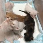 口元からミルクのニオイがするヤツはちゅうちゅうされる #子猫動画