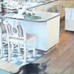地震だあ逃げろおお #猫動画