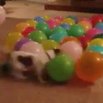 犬「なにコレおもしれー」 #犬動画