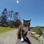 犬もまたぐ高度な技もこなすスケボーキャット #猫動画