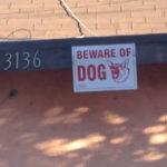 猛犬注意(BEWARE OF DOG) 犬動画