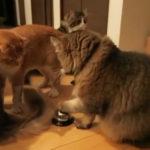 猫「執事よ私に餌を持って来なさい」