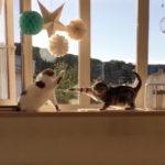 空振り連打猫パンチ炸裂 (お互い一発も当たっていません) #猫動画