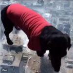 高層ビルで床がガラス張りでも犬は平気? それとも気づいてない? #犬動画