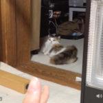 反応が微妙なバーン 猫動画