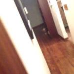 永遠に終わらないだるまさんが転んだ #犬動画