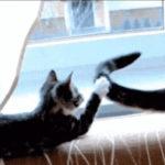 「ごめんにゃ~」 尻尾を触りすぎてお父さん猫に怒られる。