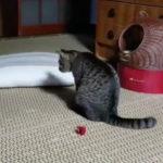 あれどこ?見失って偶然尻尾のおかげで出てきた ヽ(*´∀`)ノワーイ 猫動画