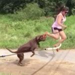 バーに引っかかった飼い主と一緒に危うく巻き添え 犬動画