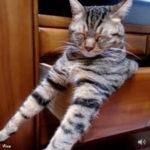 前足をビーンっと伸ばして眠るにゃんこ 猫動画