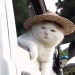 軽トラに乗った農家のおじちゃん 猫動画