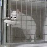 鍵を開けて脱走する猫 猫動画