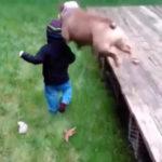 リング上からボディープレス!犬動画