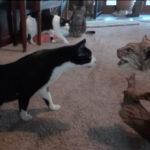 4匹の猫が剥製を前に抜き足差し脚で緊張気味。最後は・・・